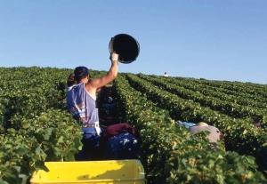 Agir pour réduire les TMS dans la viticulture, c'est possible...